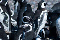 Imagen Excursión de medio día en barco a la colonia de pingüinos desde Ushuaia