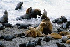 Imagen Tour de un día completo por la península Valdés desde Puerto Madryn con avistamiento de ballenas opcional