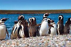 Imagen Colonia de pingüinos en Punta Tombo y Union Beach desde Puerto Madryn con avistamiento de ballenas en Toninas opcional