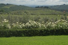Discover Chianti Through its Wines