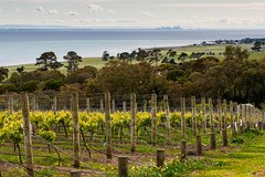 Imagen Bellarine Peninsula Small Group Wine Tour with 2 Course Lunch and Morning Tea