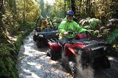 Imagen Quad Tour on the Enchanted Forest Track in Greymouth