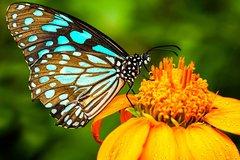 Actividades,Actividades de aventura,Salidas a la naturaleza,Parque de Mariposas
