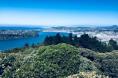 Imagen Shore Excursion: Otago Peninsula Scenery and City Highlights Tour