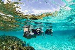 Imagen Sydney 3-Hour Snorkeling Tour