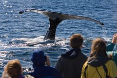 Activities,Activities,Activities,Activities,Activities,Water activities,Water activities,Water activities,Adventure activities,Adventure activities,Nature excursions,Nature excursions,Nature excursions,Sports,Excursion to Mendenhall Glacier,Whale watching in Juneau