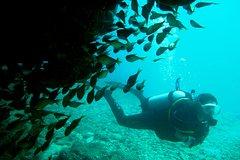 Imagen Scuba Dive Ningaloo Reef