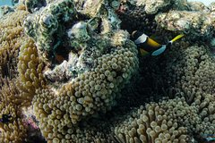 Imagen Muiron Island Dive & Snorkel Tour