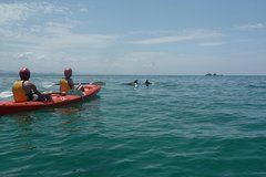 Imagen Kayaking with Dolphins in Byron Bay