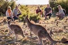 Imagen 8-Day Tasman Wildlife and Wilderness Encounter Including Accommodation