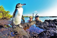 Imagen THE BEST OF ECUADOR & GALAPAGOS ACTIVE EXCURSION 11 DAYS