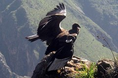 Imagen Full Day Tour to Colca Canyon, Daily departures, Starts and ends in Arequipa