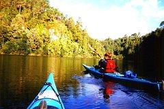 Imagen Tauranga Shore Excursion: Wairoa River Kayak Tour