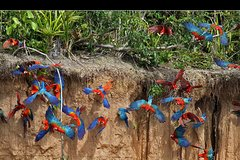 Imagen Macaw Clay Lick 2 days & 1 night