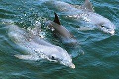 Playa del Ingles Gran Canaria Dolphin Search 60269P14
