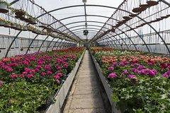 Imagen Santa Elena Day Trip: Silleteros and Flower Farm Cultural Tour