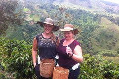 Imagen Medellin City and Coffee Region Tour