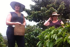Imagen Day Tour to Medellín, Countryside and Coffee Region