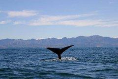 Imagen Kaikoura Whales
