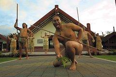 Imagen Tauranga Shore Excursion: Te Puia Maori Cultural Centre and Rotorua City Sightseeing