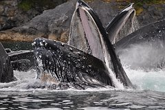 City tours,Theme tours,Historical & Cultural tours,Whale watching in Juneau