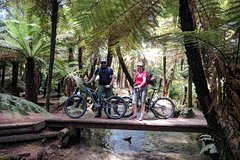 Imagen Redwoods Mountain Bike Ebike Tour