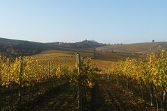 A FULL DAY IN THE CHIANTI WINE LAND: DISCOVER THE TUSCAN COUNTRYSIDE
