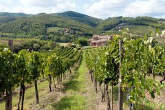 CHIANTI TOUR WITH A VISIT OF AN ORGANIC CELLAR AND A SPECIAL WINE TASTING