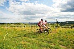 Ver la ciudad,Ver la ciudad,Ver la ciudad,Visitas en bici,Tours con guía privado,Especiales,Tour por Viena,Excursión a Bosques de Viena