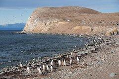 Ver la ciudad,Actividades,Actividades acuáticas,Avistamiento de Pingüinos en Isla Magdalena