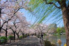 Ver la ciudad,Ver la ciudad,Ver la ciudad,Actividades,Tours andando,Tours con guía privado,Actividades de aventura,Salidas a la naturaleza,Especiales,Especiales,Tour por el Barrio Asakusa