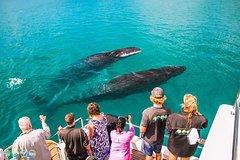 Imagen Humpback Whale Sunset Cruise