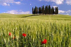 Montalcino, Orcia Valley, Pienza, and Montepulciano: Wine- and Cheese-Tasti