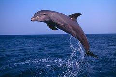 Activities,Activities,Water activities,Water activities,Nature excursions,Sports,Muscat Tour