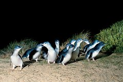 Imagen Penguins Walks And Wildlife In The Wild