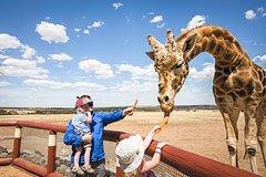Imagen Giraffe Safari and a day at Monarto Zoo