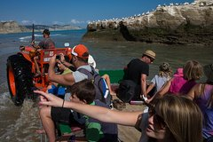 Gannet Beach Adventures - more fun than you ever imagined!