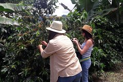 Imagen Coffee Tour in the beautiful Jardin town (Full-Day)