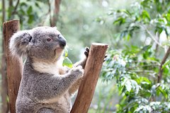 Blue Mountains Luxury Small Group Touring Experience - With Rides