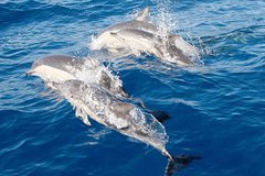 Imagen Port Stephens Day Tour From Sydney Including 4WD, Sandboarding and Dolphin Watching