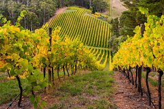 Imagen Private Adelaide Hills Wine Region Tour