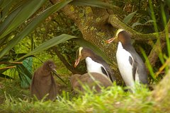 Imagen Dunedin and Otago Peninsula Wildlife Tour with Optional Larnach Castle Visit
