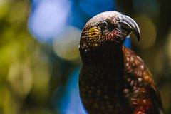 Imagen Sanctuary Mountain (Mt Maungatautari) & Hamilton Gardens Day trip from Auckland