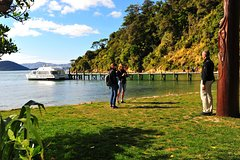 Imagen Motuara Island Bird Sanctuary and Ship Cove Cruise from Picton