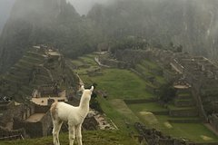 Imagen Machu Picchu private guided tour from Aguas Calientes