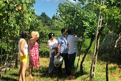 Experience the Valpolicella through 3 selected wineries