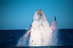 Imagen Whale Watching Cruise from Mooloolaba
