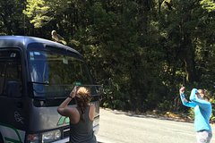 Imagen 12 Day Ultimate South Island Tour - Private - Fully Guided