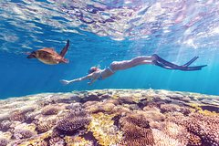 Imagen 7-Day Exmouth Explorer via The Pinnacles Monkey Mia & Ningaloo Reef Perth Return