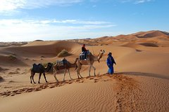 City tours,Theme tours,Historical & Cultural tours,Excursión to the desert